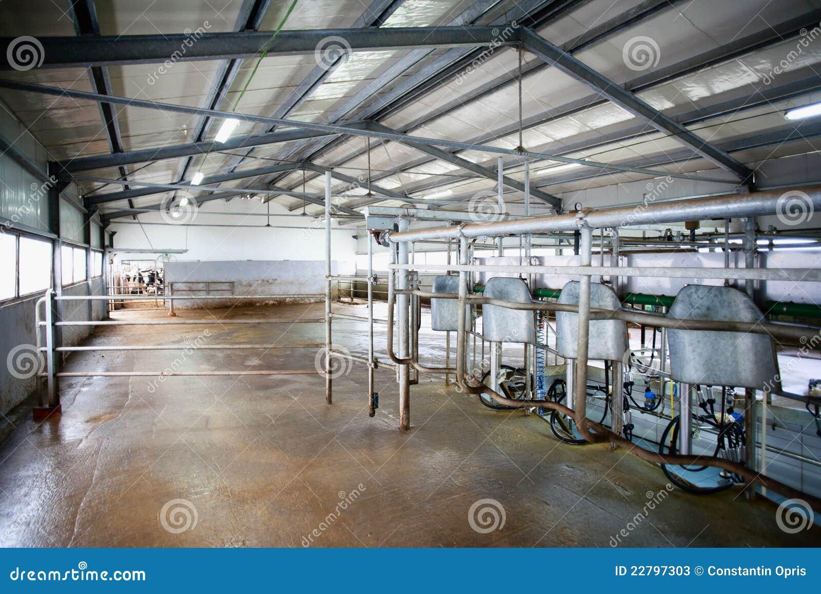 挤奶系统的母牛农场