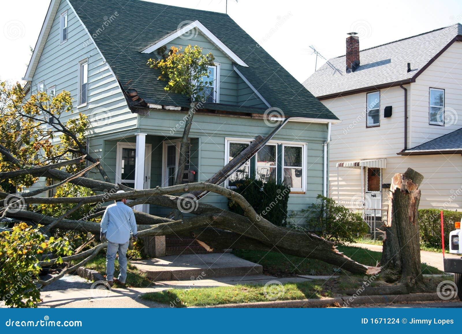 损坏的房子结构树