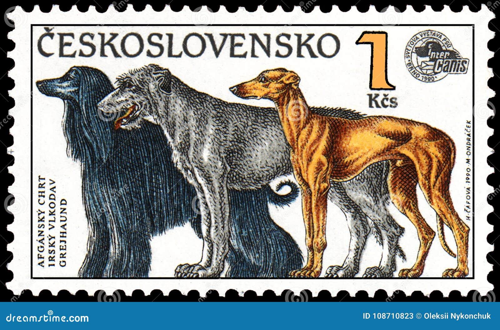 捷克斯洛伐克-大约1990年:盖印,打印在捷克斯洛伐克,展示一只阿富汗猎犬,爱尔兰猎犬,灵狮,系列世界狗