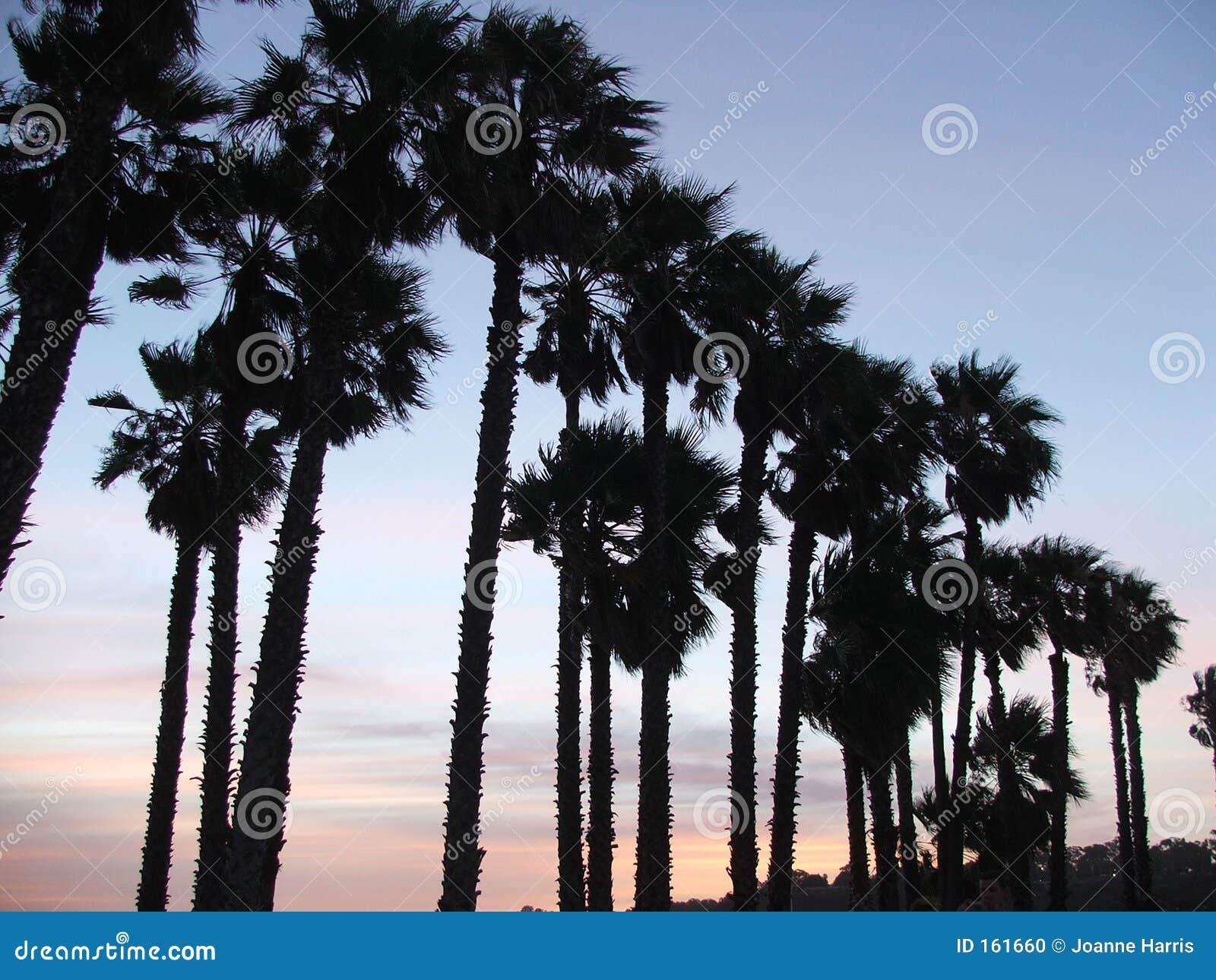 掌上型计算机日落结构树