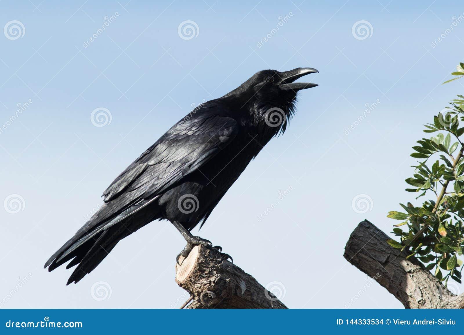 掠夺被栖息在树的上流呼吁疆土创立
