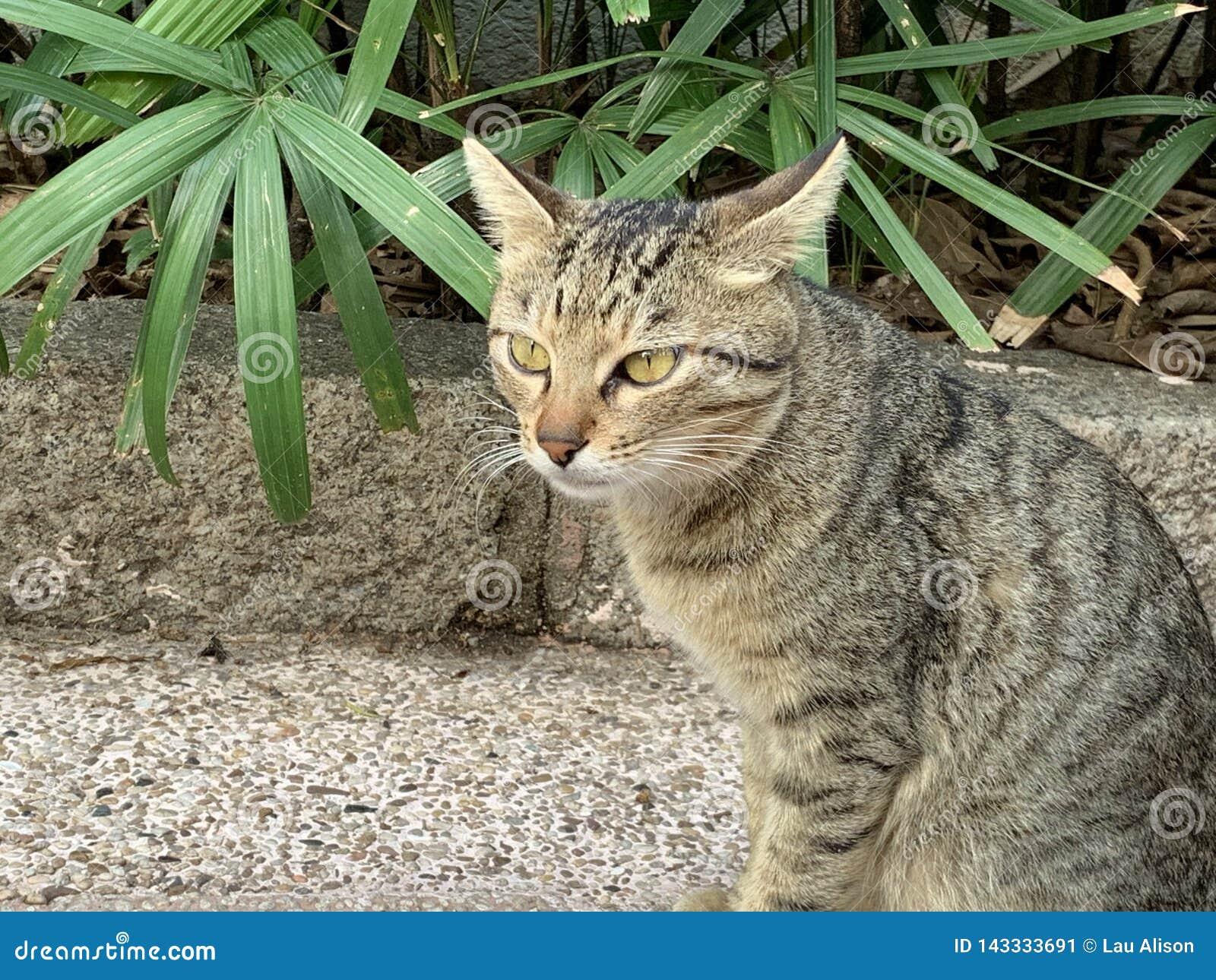 探索在街道生活方式的猫