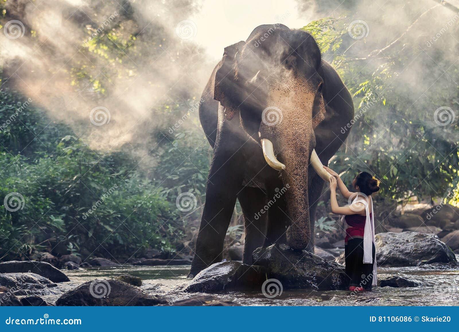 接触大象` s象牙的传统泰国服装的俏丽的女孩