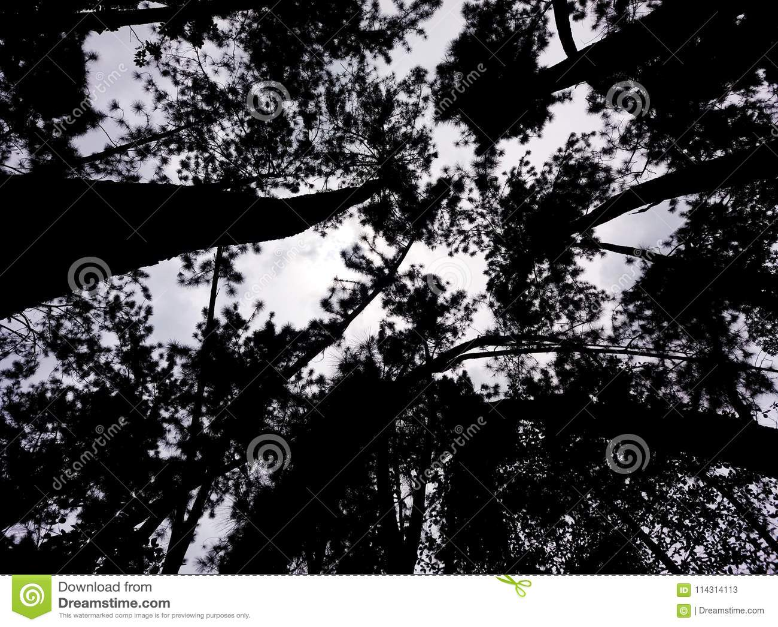 接触天空的被迷惑的树