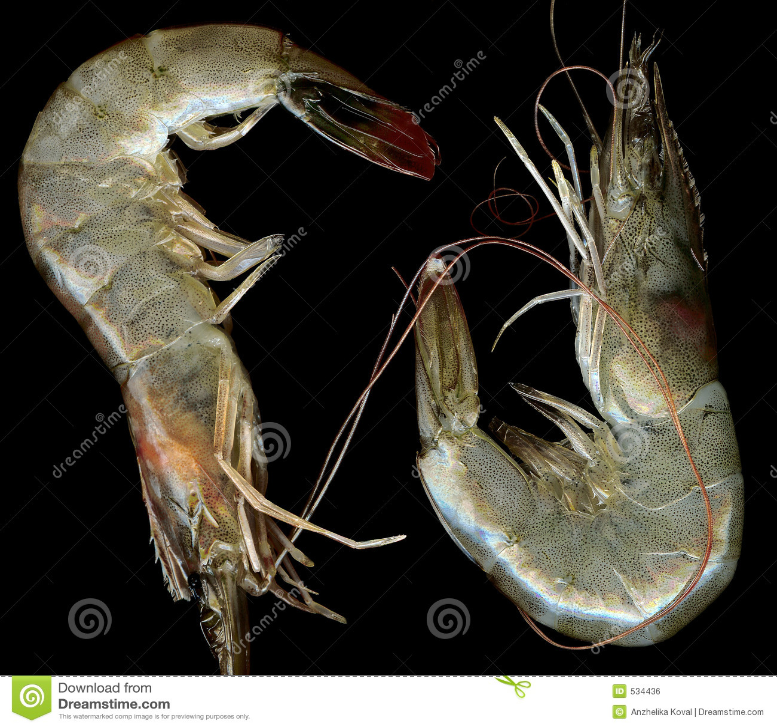 Download 接近的新鲜的大虾 库存照片. 图片 包括有 饮食, 食物, 地中海, 营养, 辣椒, 烹调, 可口, 大虾, 卡路里 - 534436