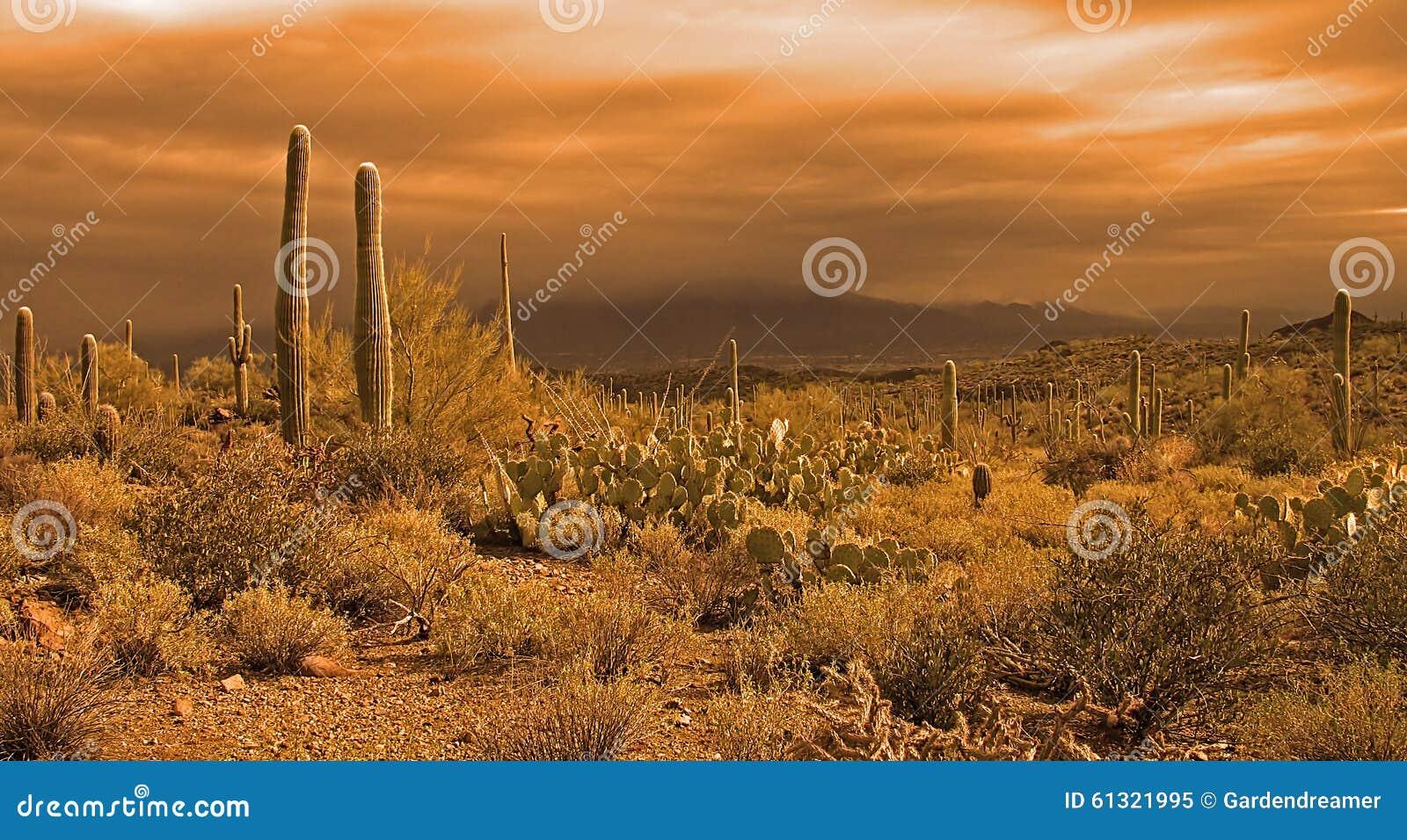 接近的沙漠风暴