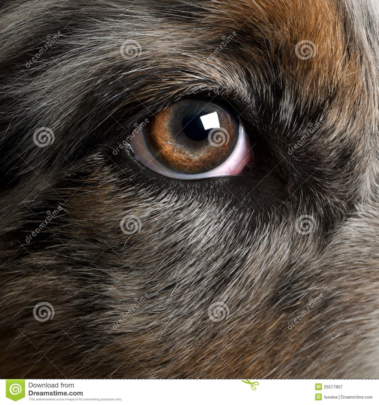 Close Up Dog Eyes