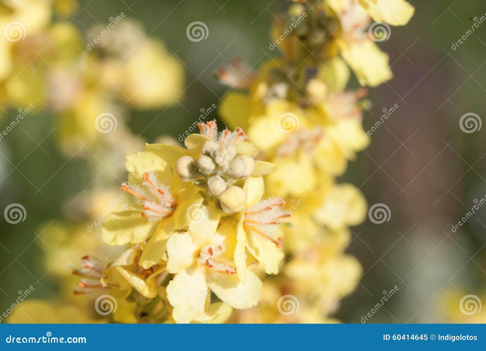 接近的花上升黄色