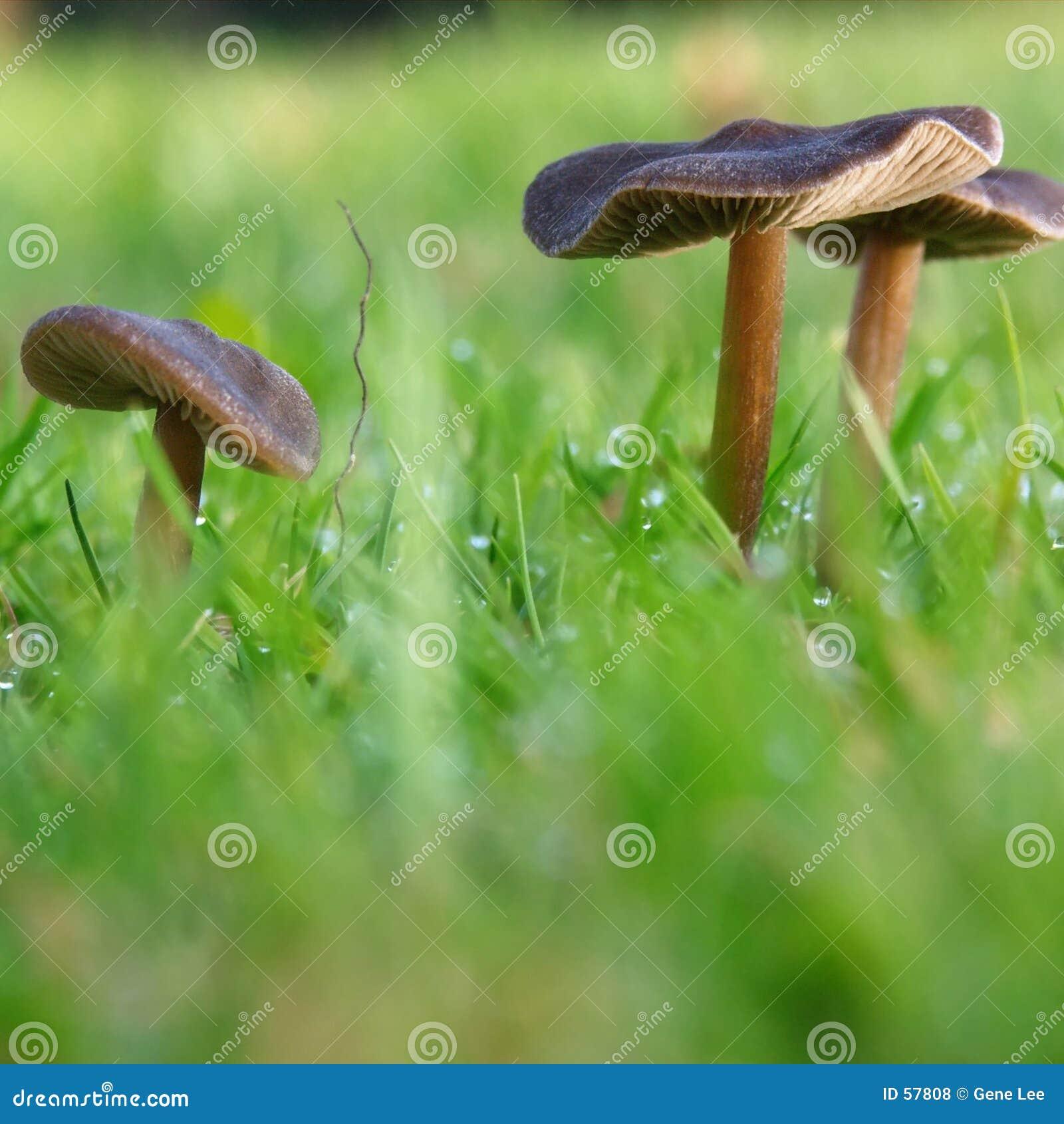 接近的蘑菇