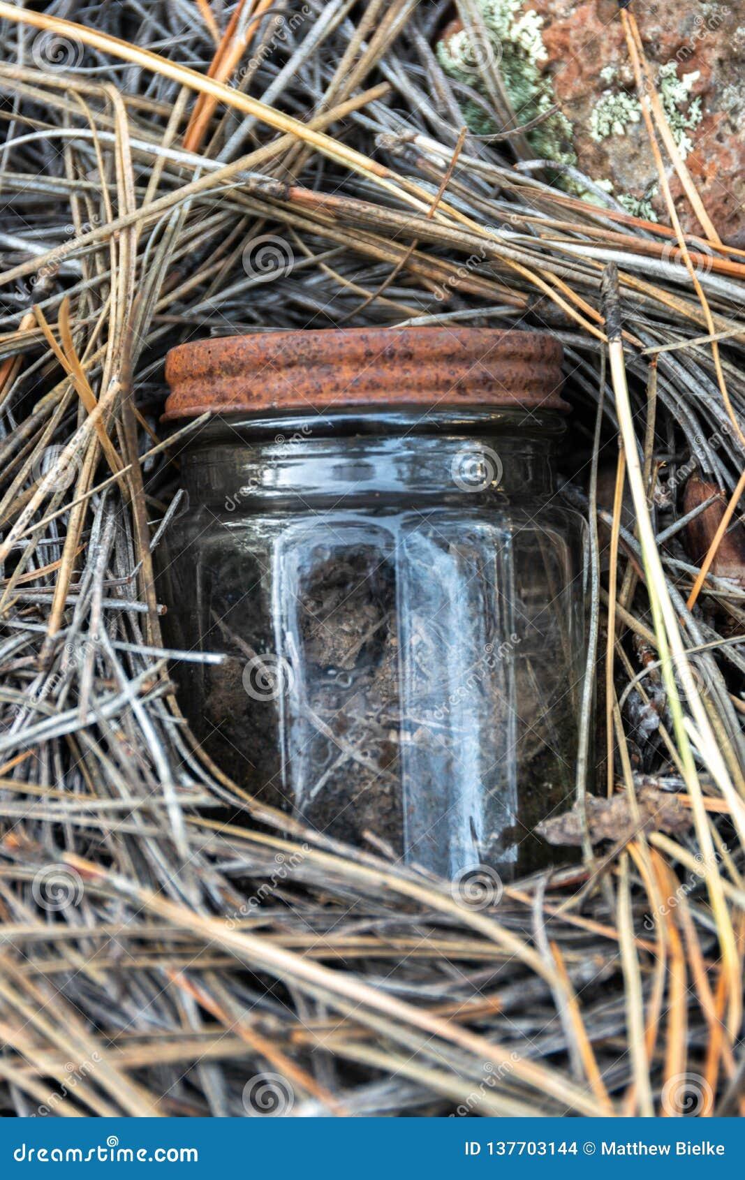 掩藏在杉木针1的微小的瓶子