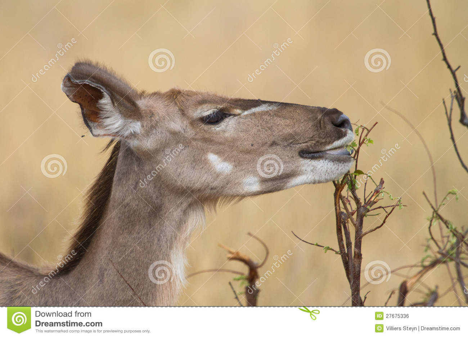提供的kudu