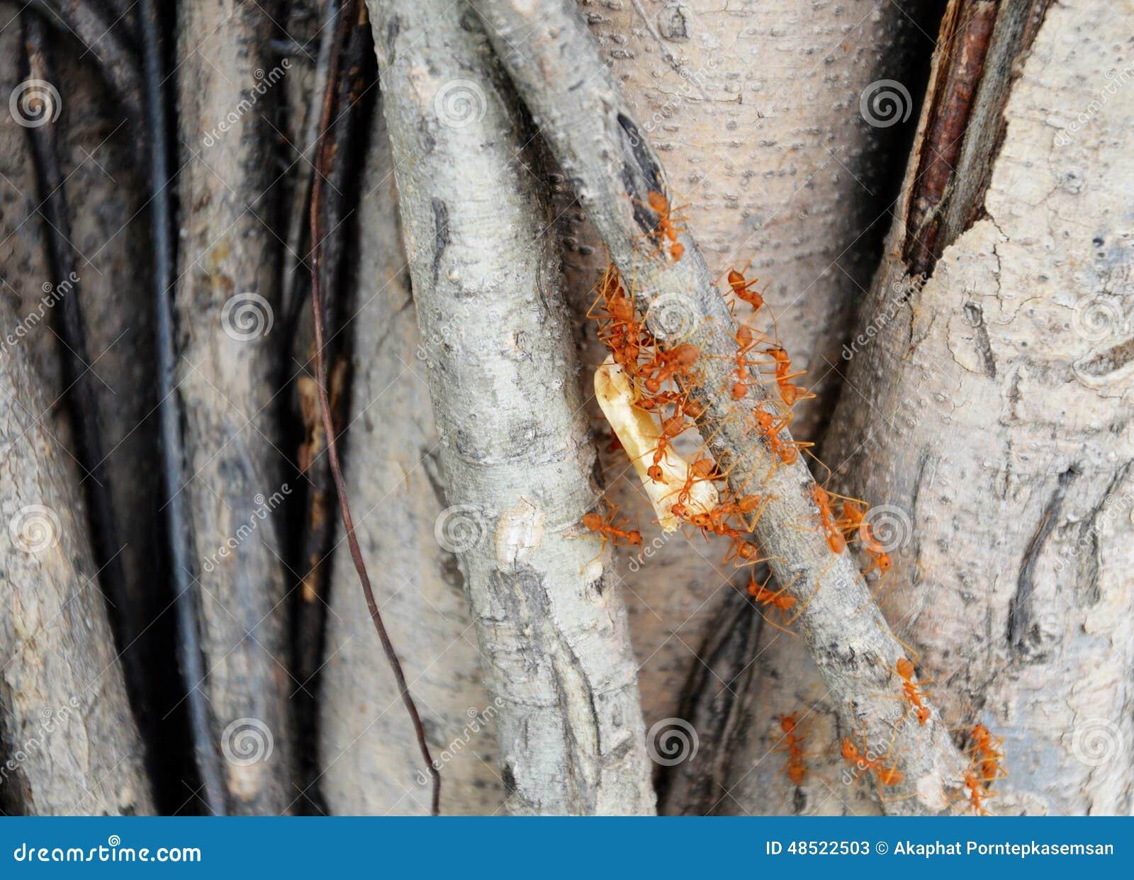 握蚂蚁自然的照片对巢动物鲸鱼-图片:48522503库存传奇最大白骨头图片