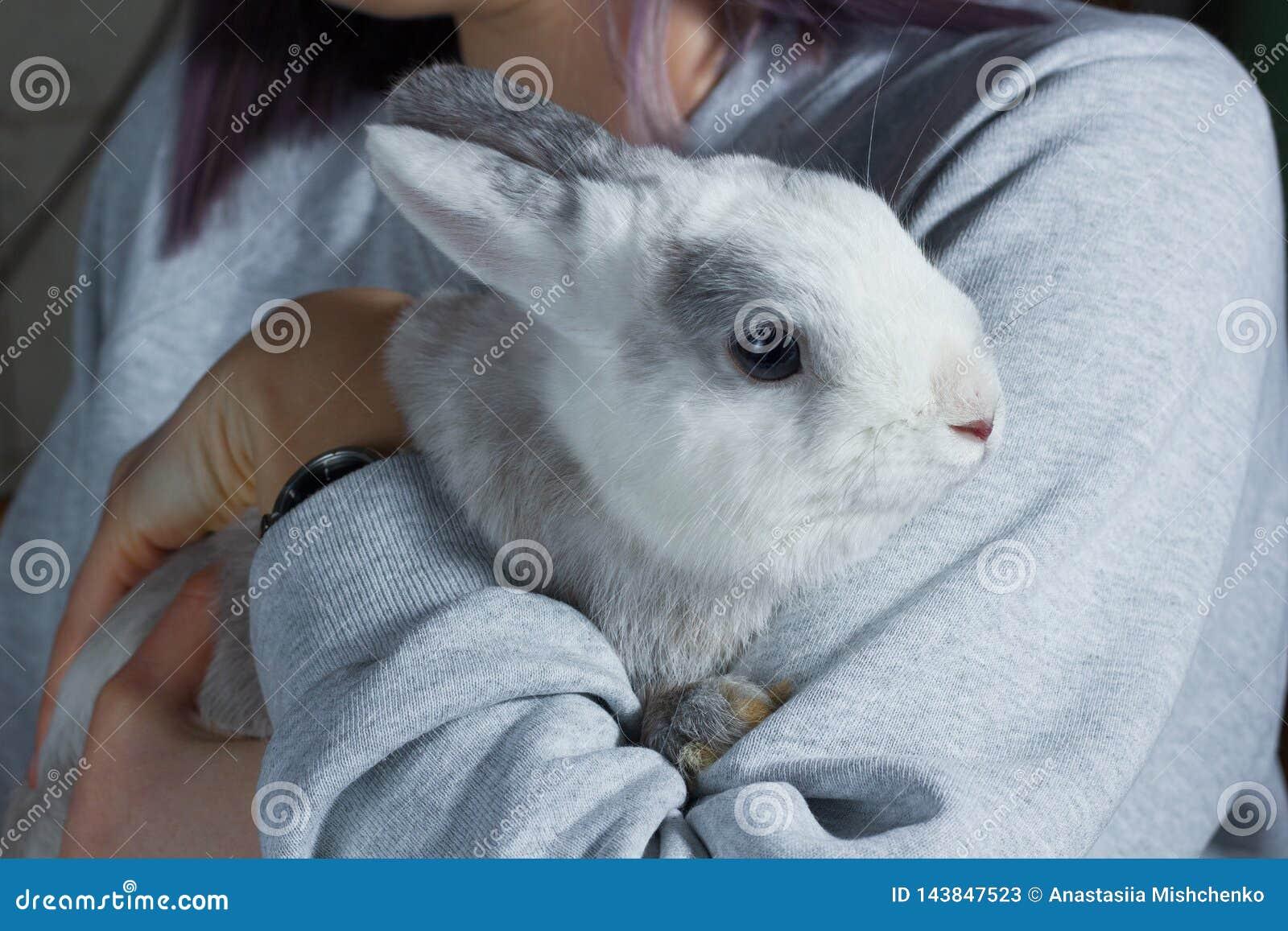 握手的女孩一只逗人喜爱的白色灰色兔子