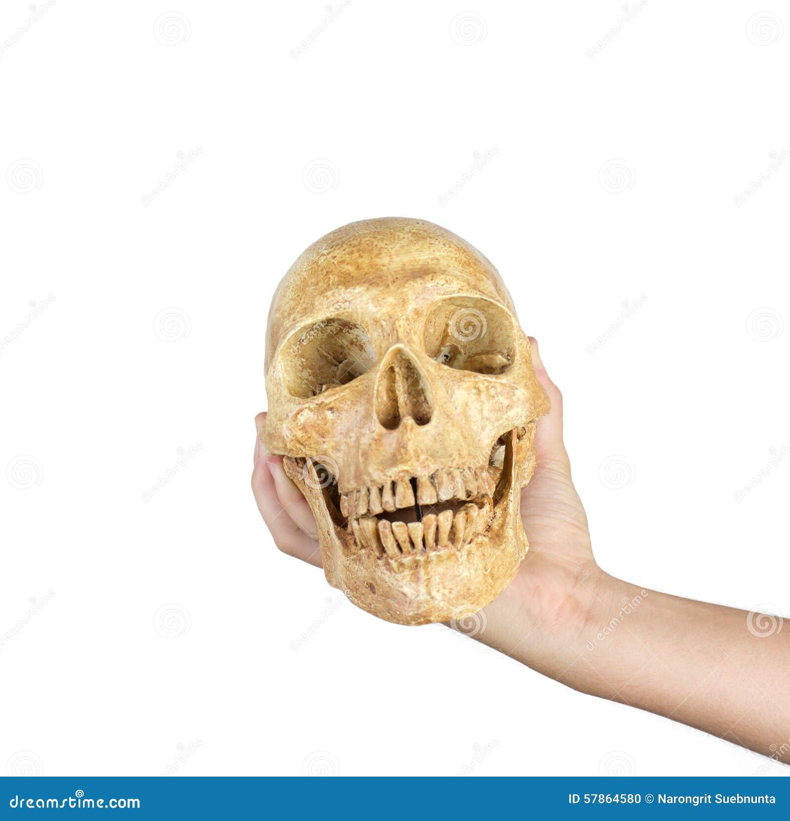 握头骨的手被隔绝在白色背景