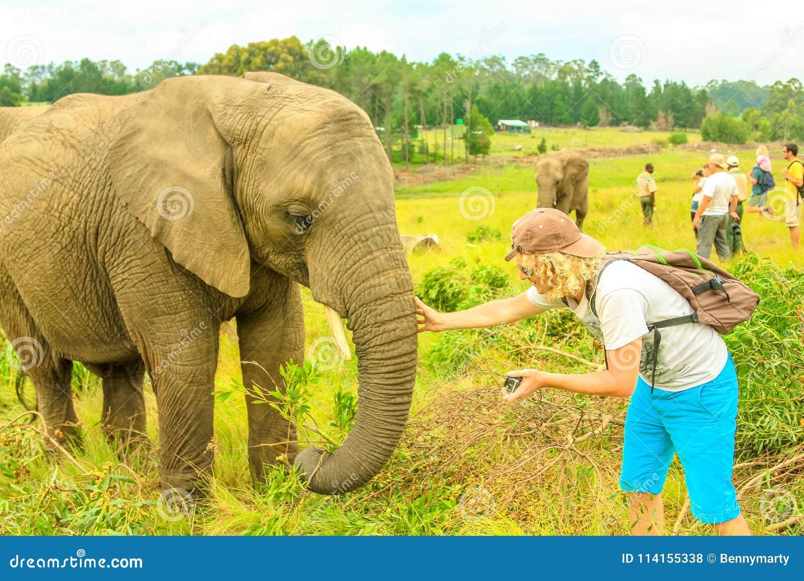 摄影师touchs大象