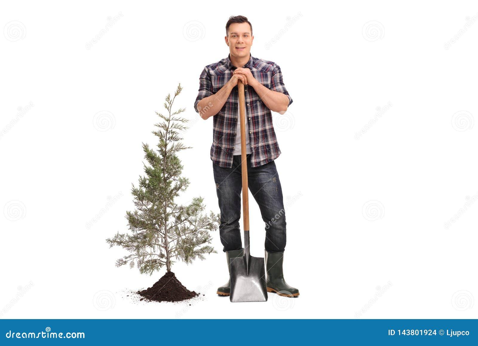 摆在与铁锹的人在被种植的树和土壤旁边