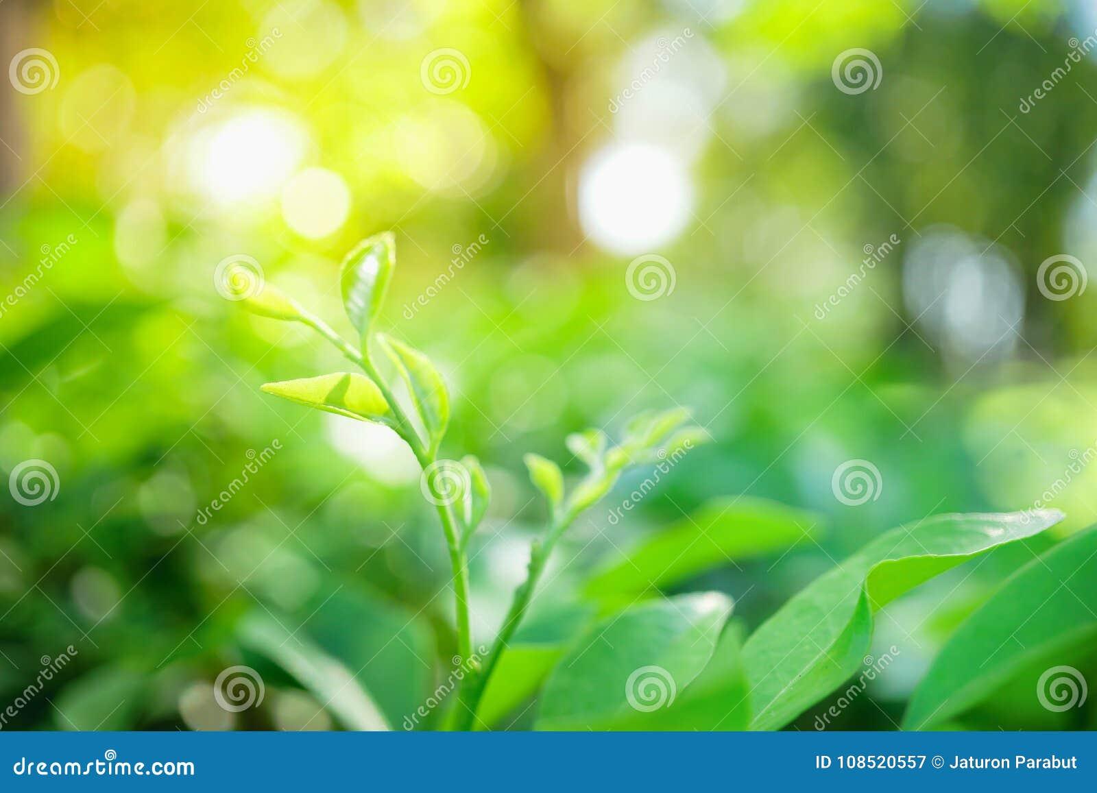 摘要弄脏了紧密绿色叶子的本质,自然绿色pl