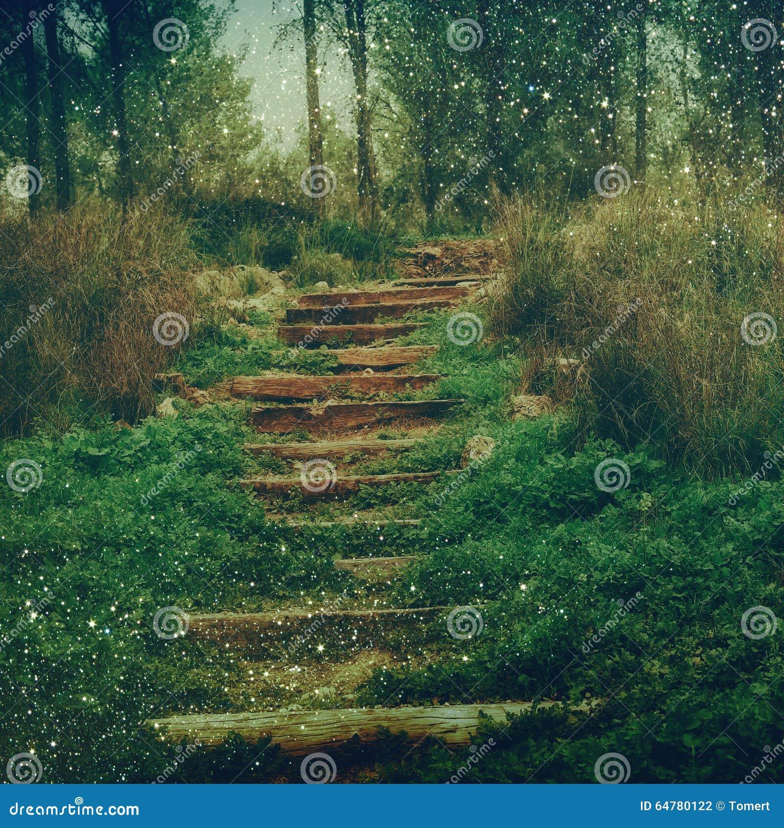 摘要被弄脏的梦想的奥秘神仙的森林和闪烁bokeh光 被过滤的图象和构造
