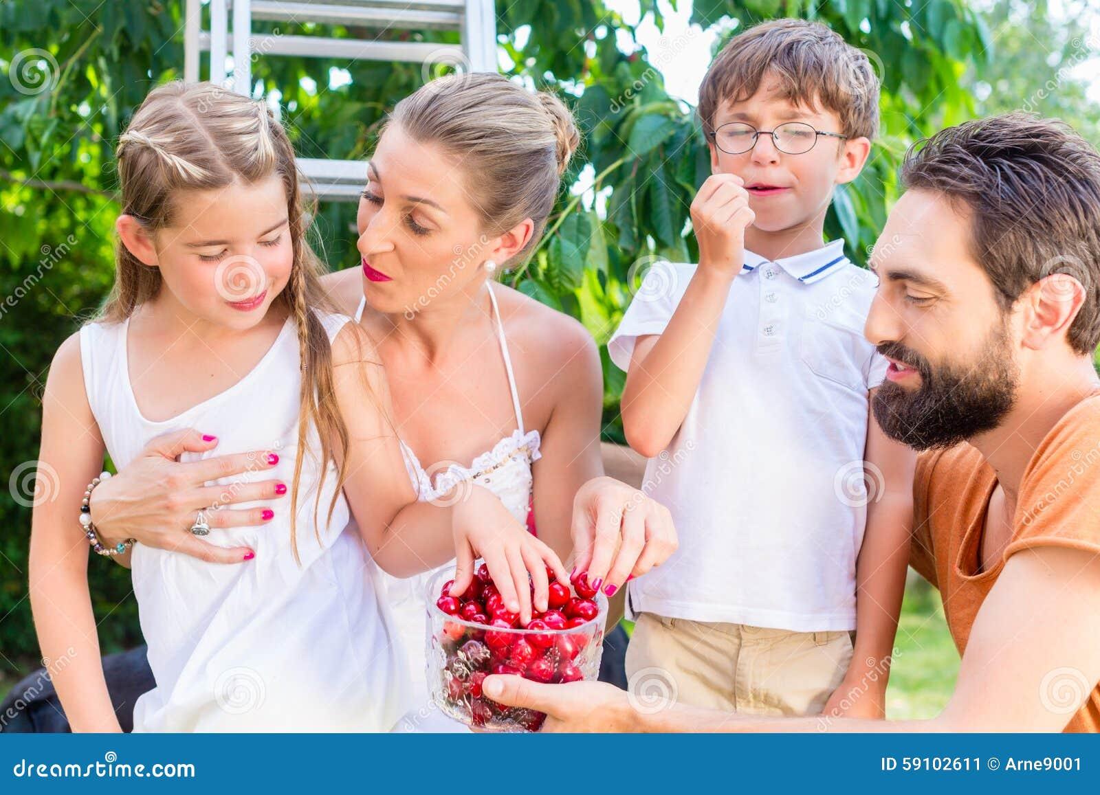 收获和吃樱桃的家庭在庭院里