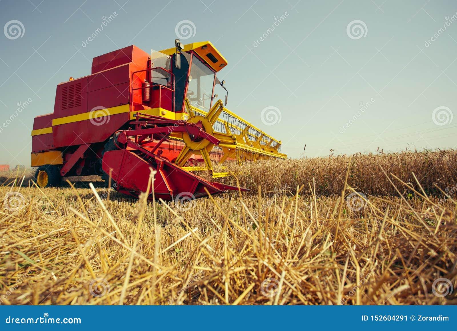 收获麦子收割机在一个晴朗的夏日