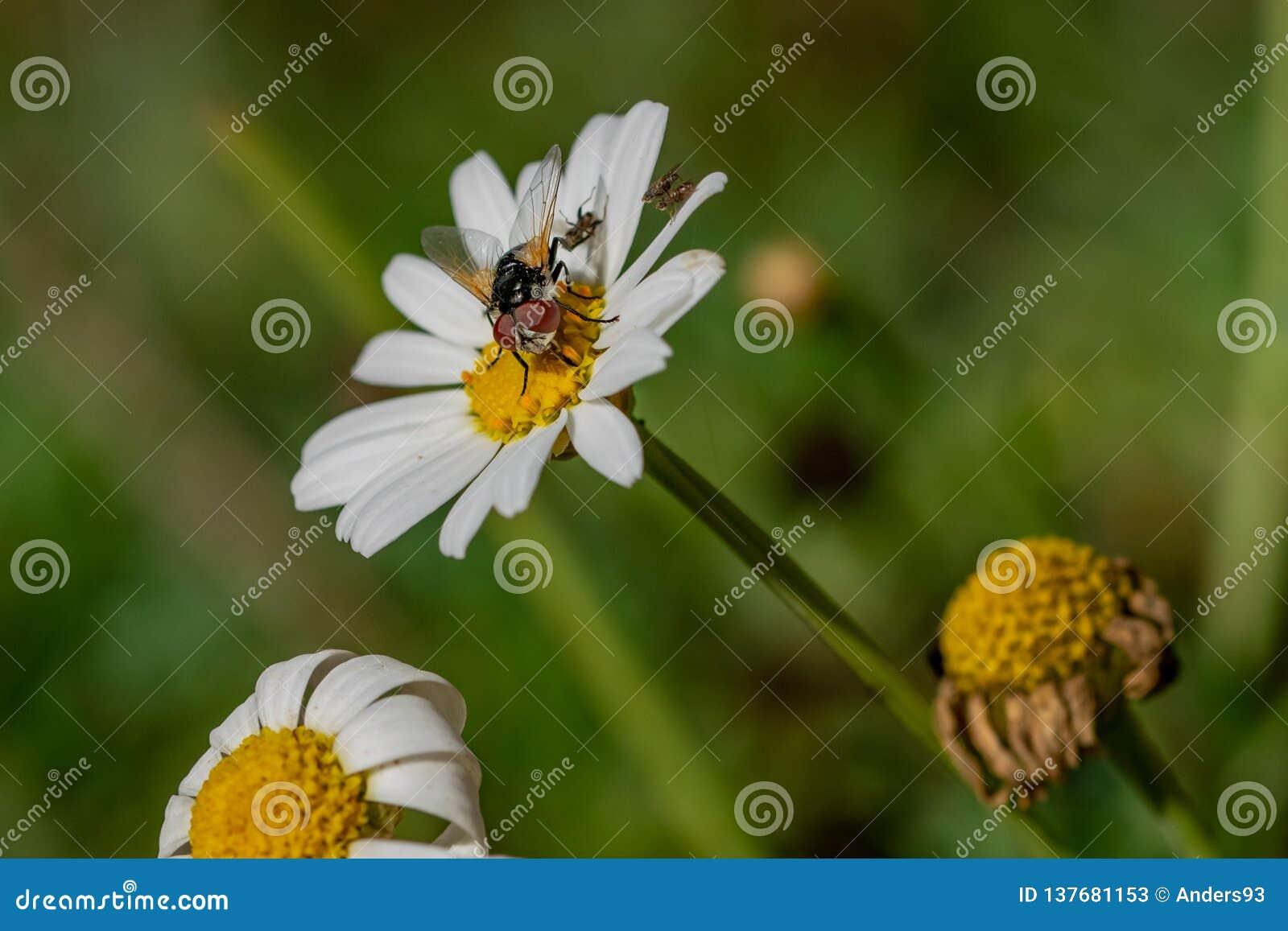 收集与更小的飞行的大飞行花蜜再生产