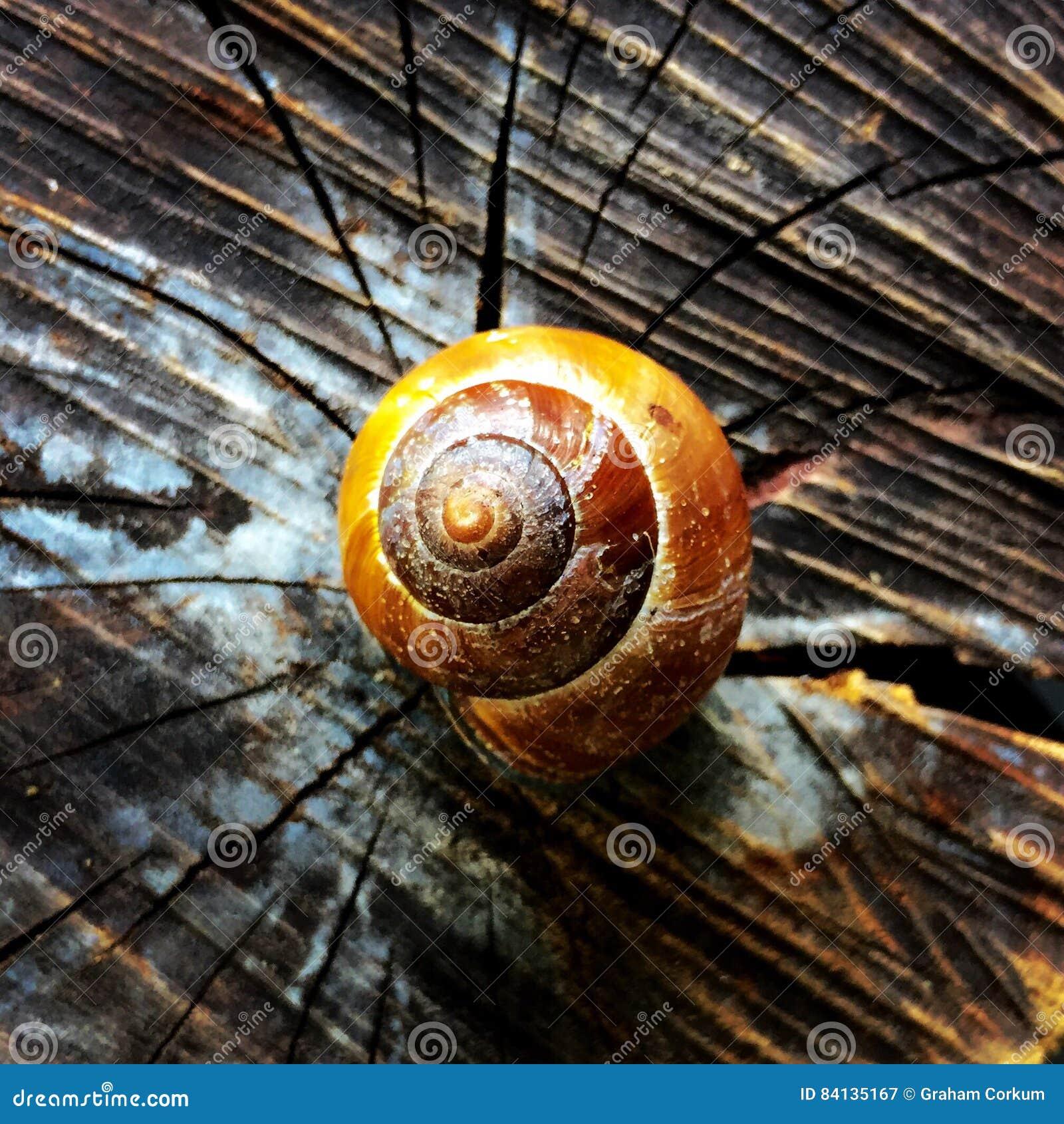 收集来穿上知道的我的壳蜗牛t
