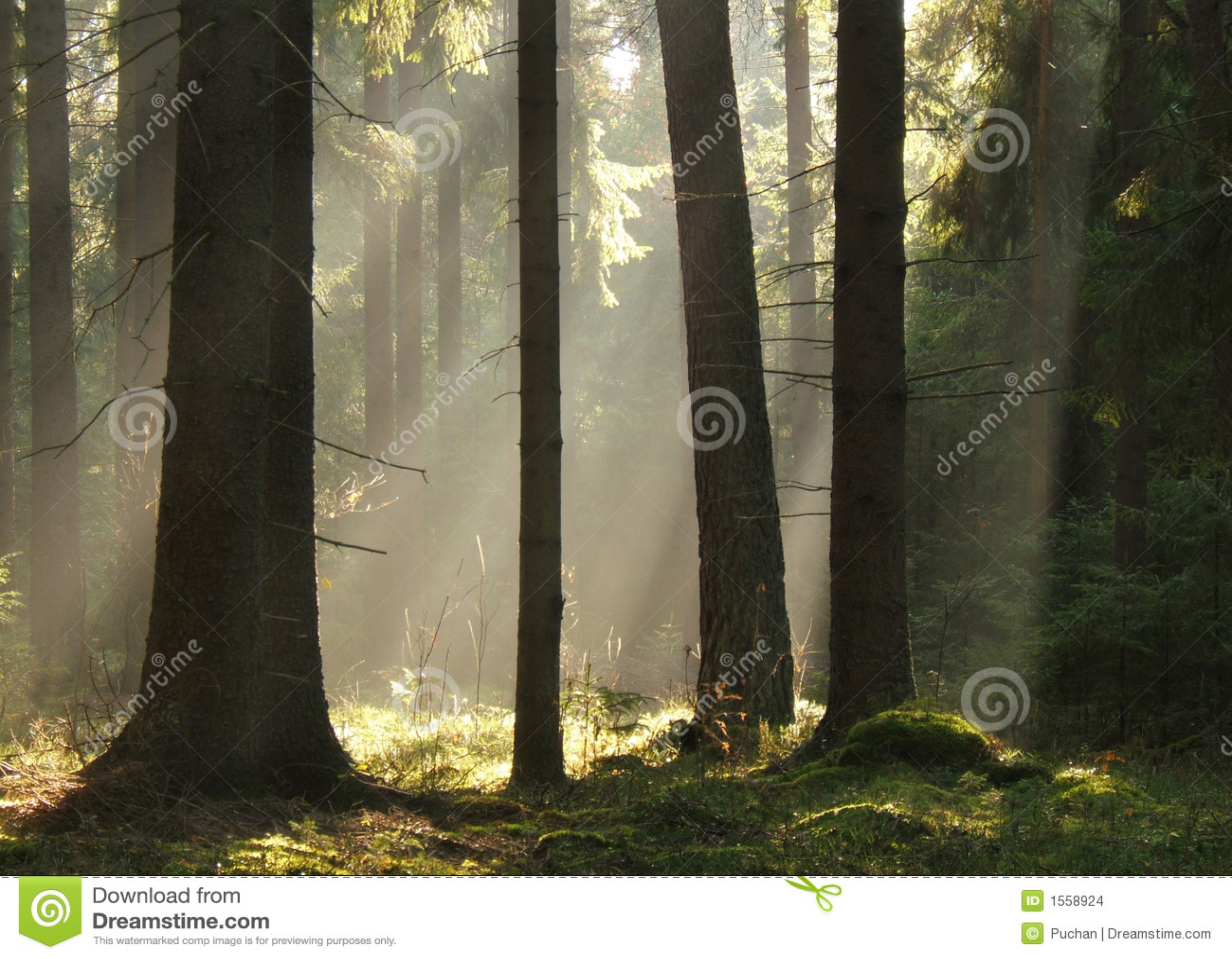 放光森林ib光