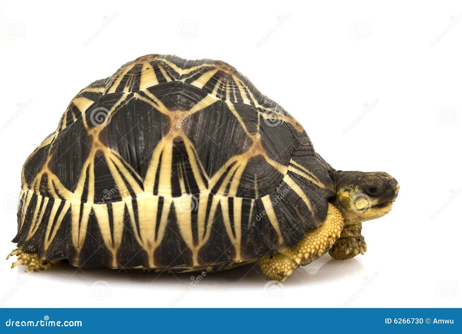 放热的草龟
