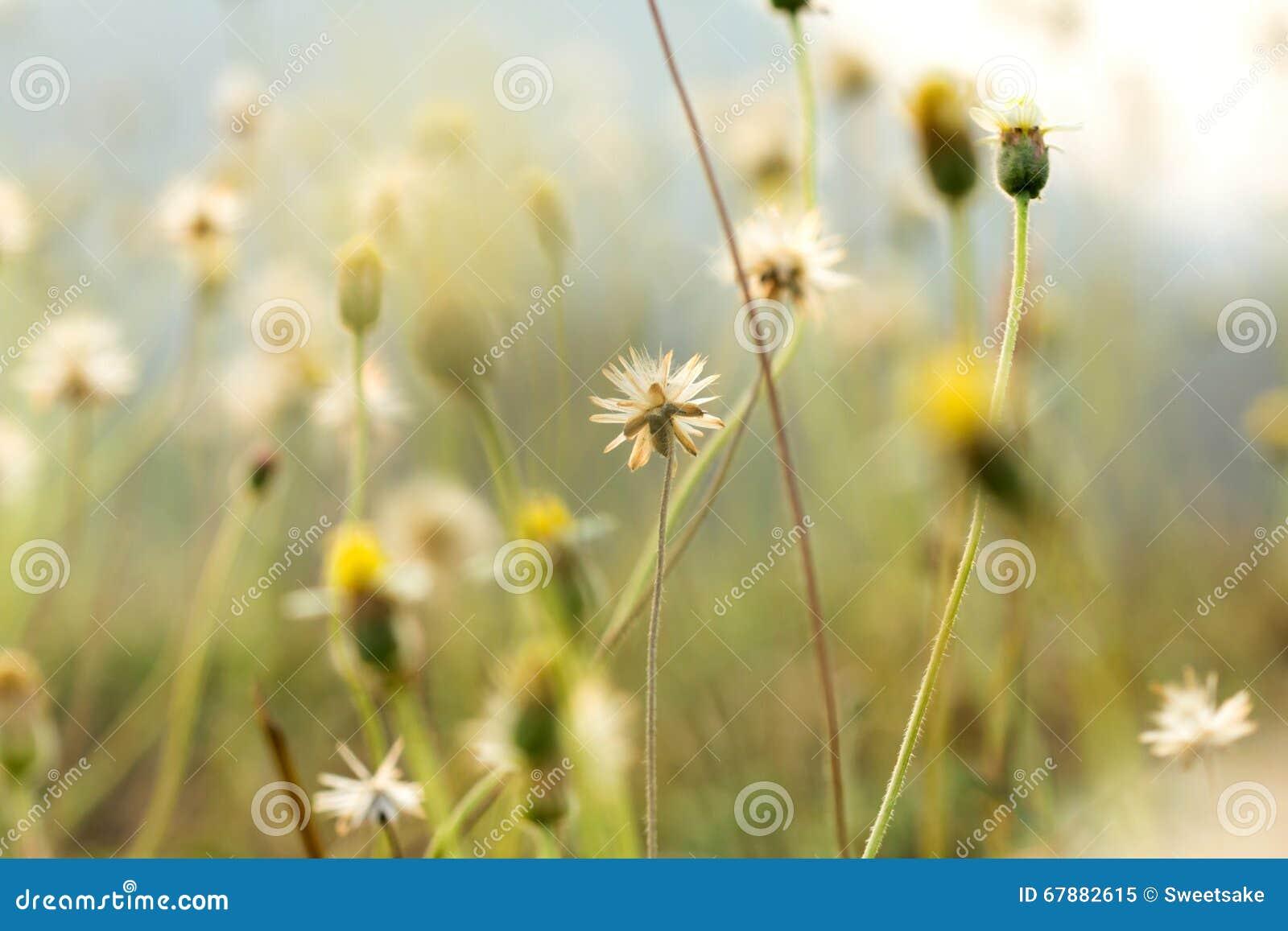放牧与浅景深的花选择聚焦