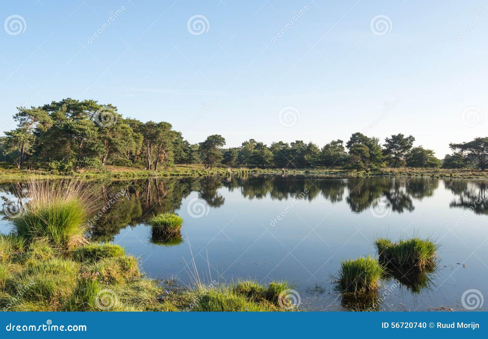 放牧在镜子光滑的水表面的丛