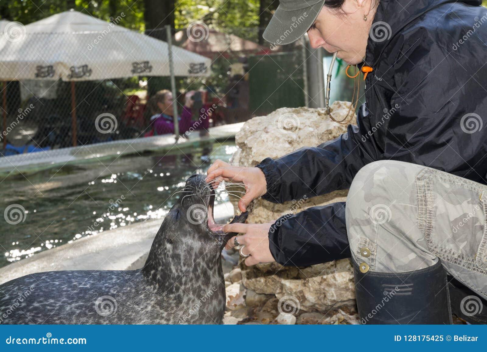 斑海豹训练