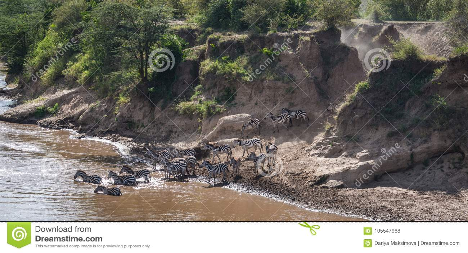斑马和角马在迁移时从塞伦盖蒂马塞语的M