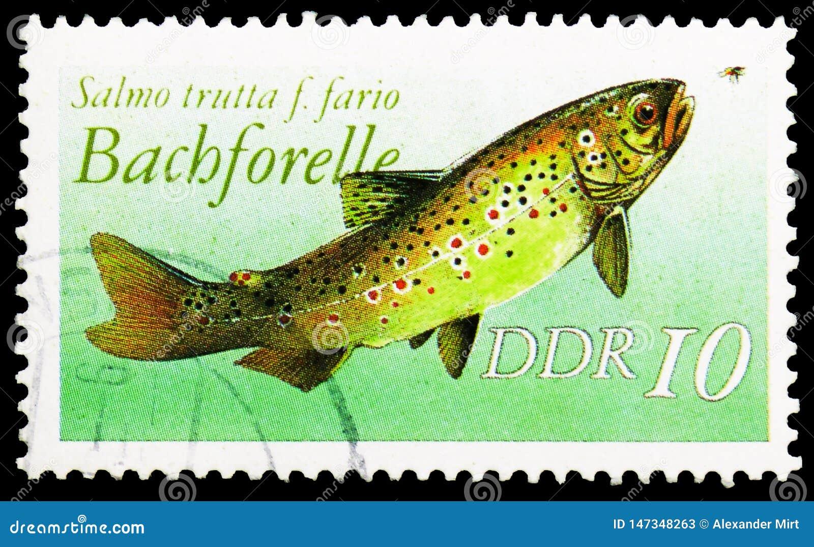 斑鳟斑鳟属trutta f fario,淡水鱼serie,大约1988年