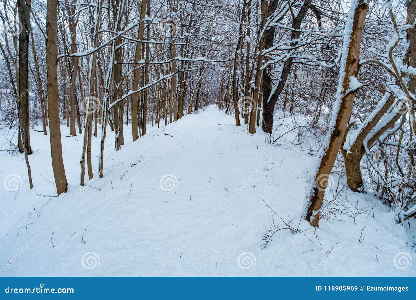 斯诺伊供徒步旅行的小道冬天