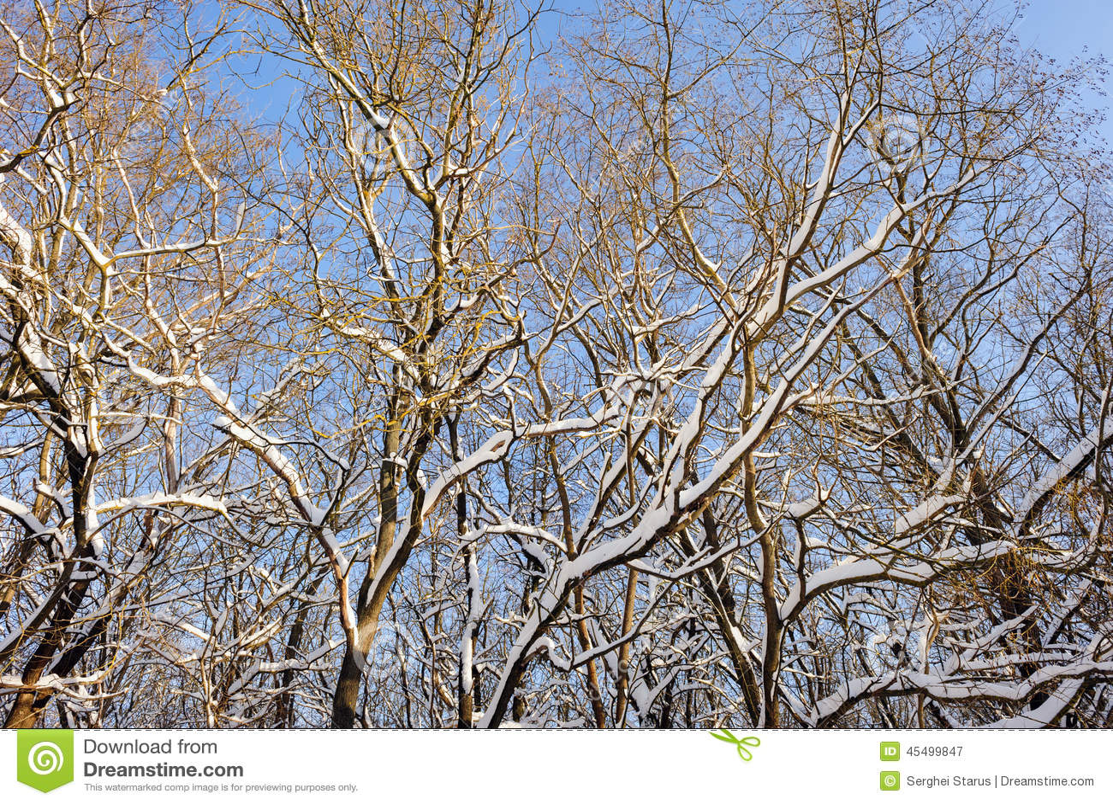 斯诺伊冬天森林