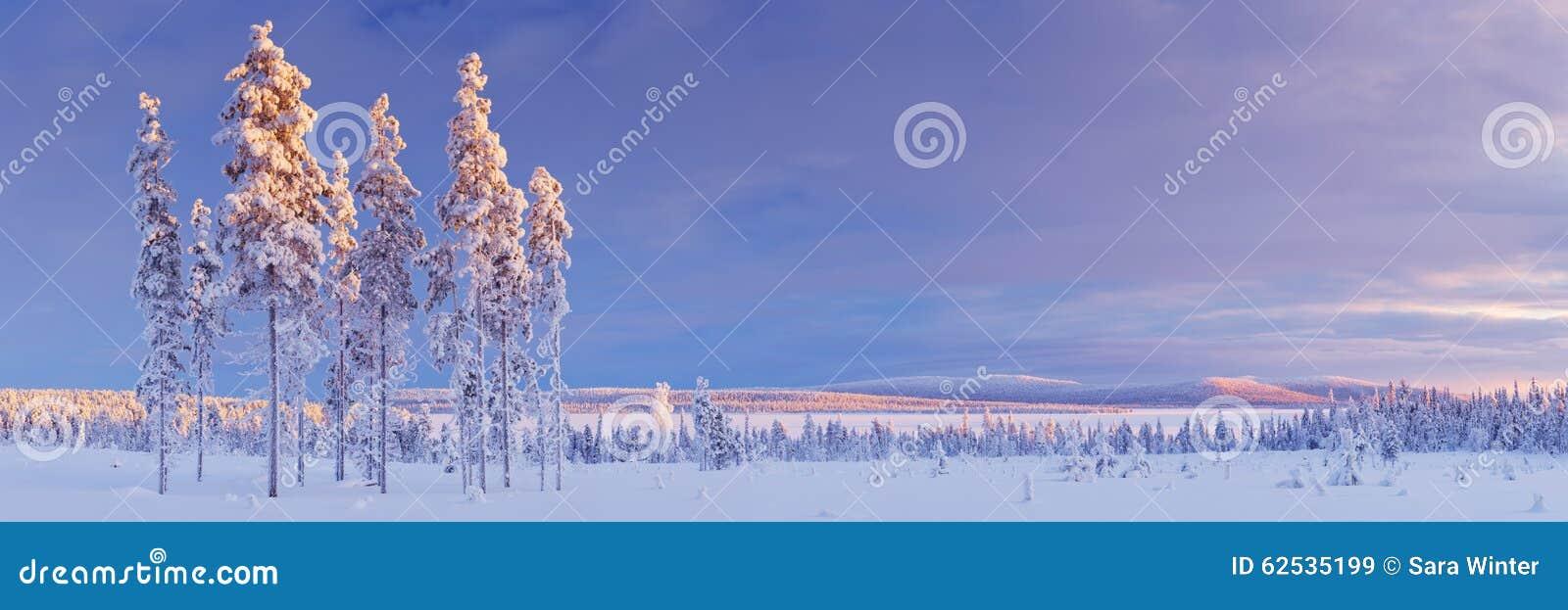 斯诺伊风景在芬兰拉普兰在日落的冬天