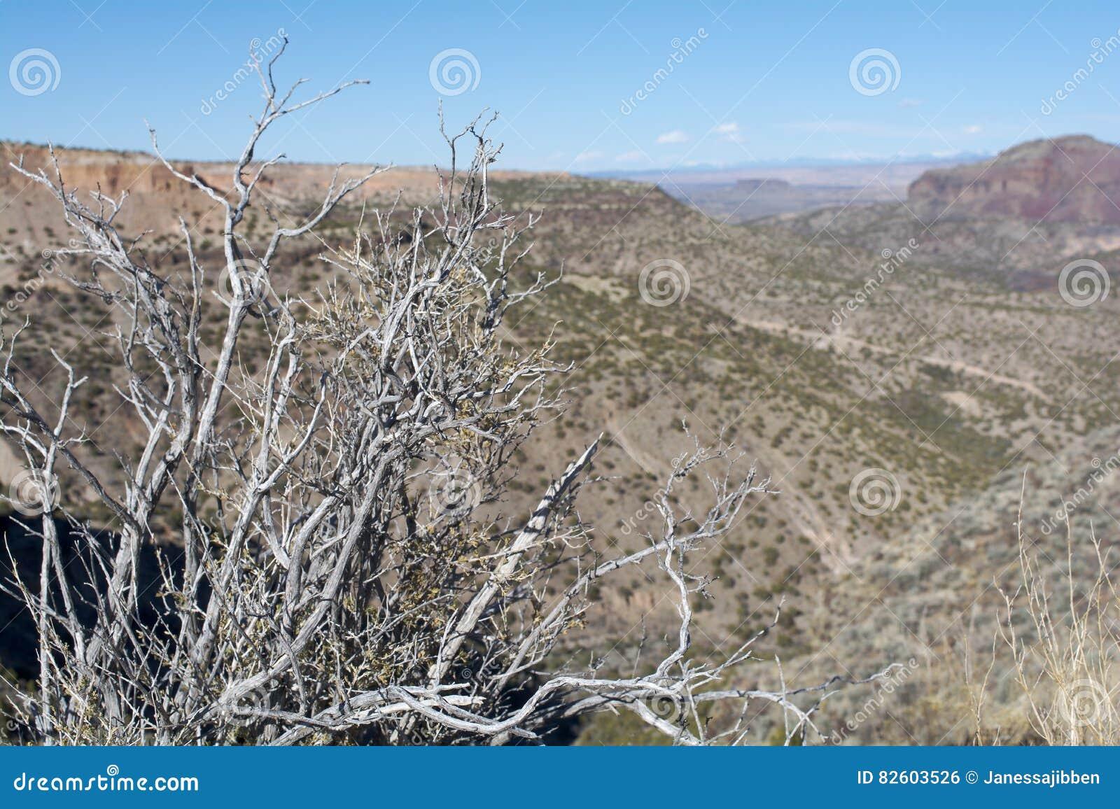 新墨西哥Mesas从俯视