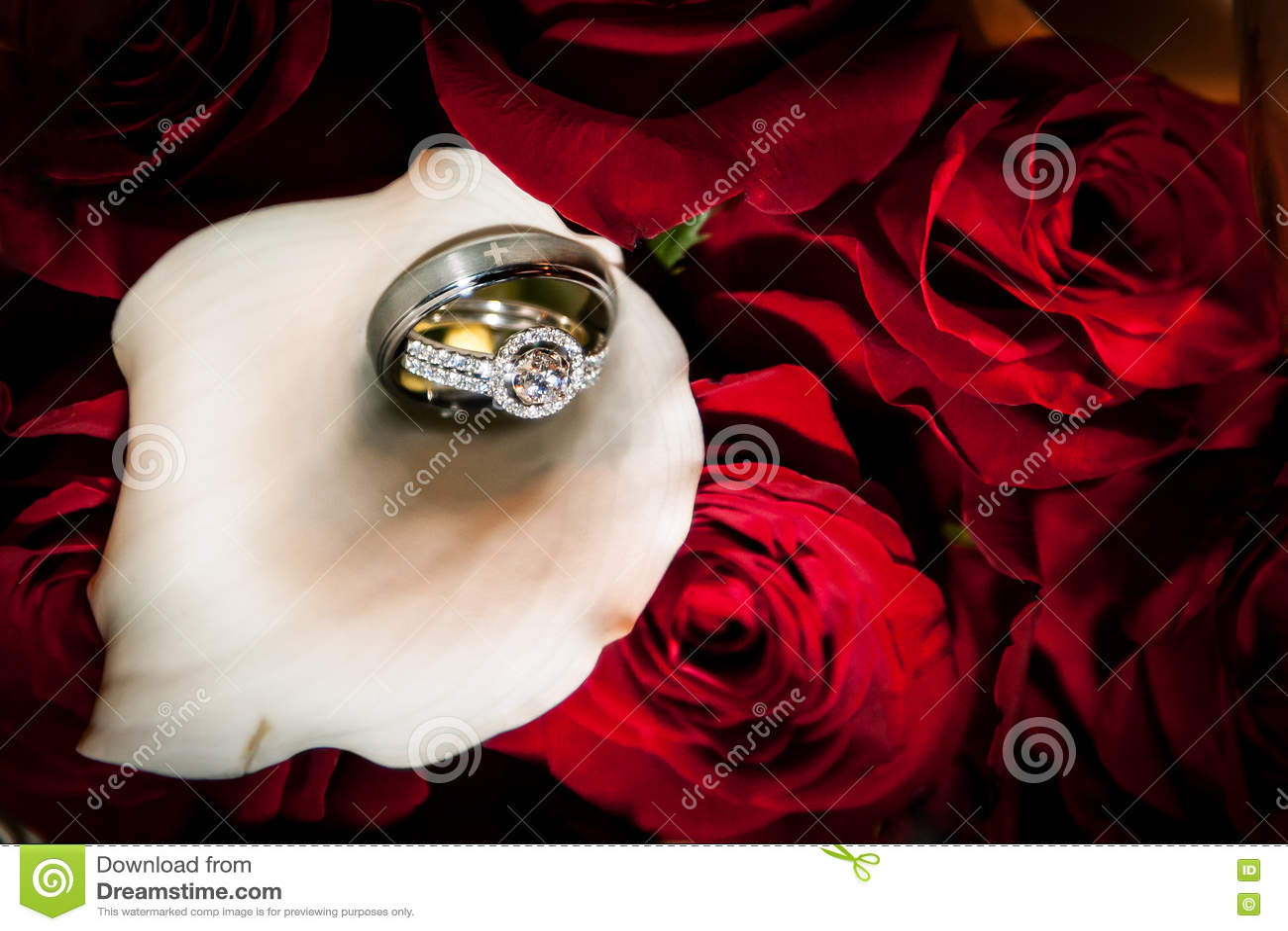 新娘和新郎圆环