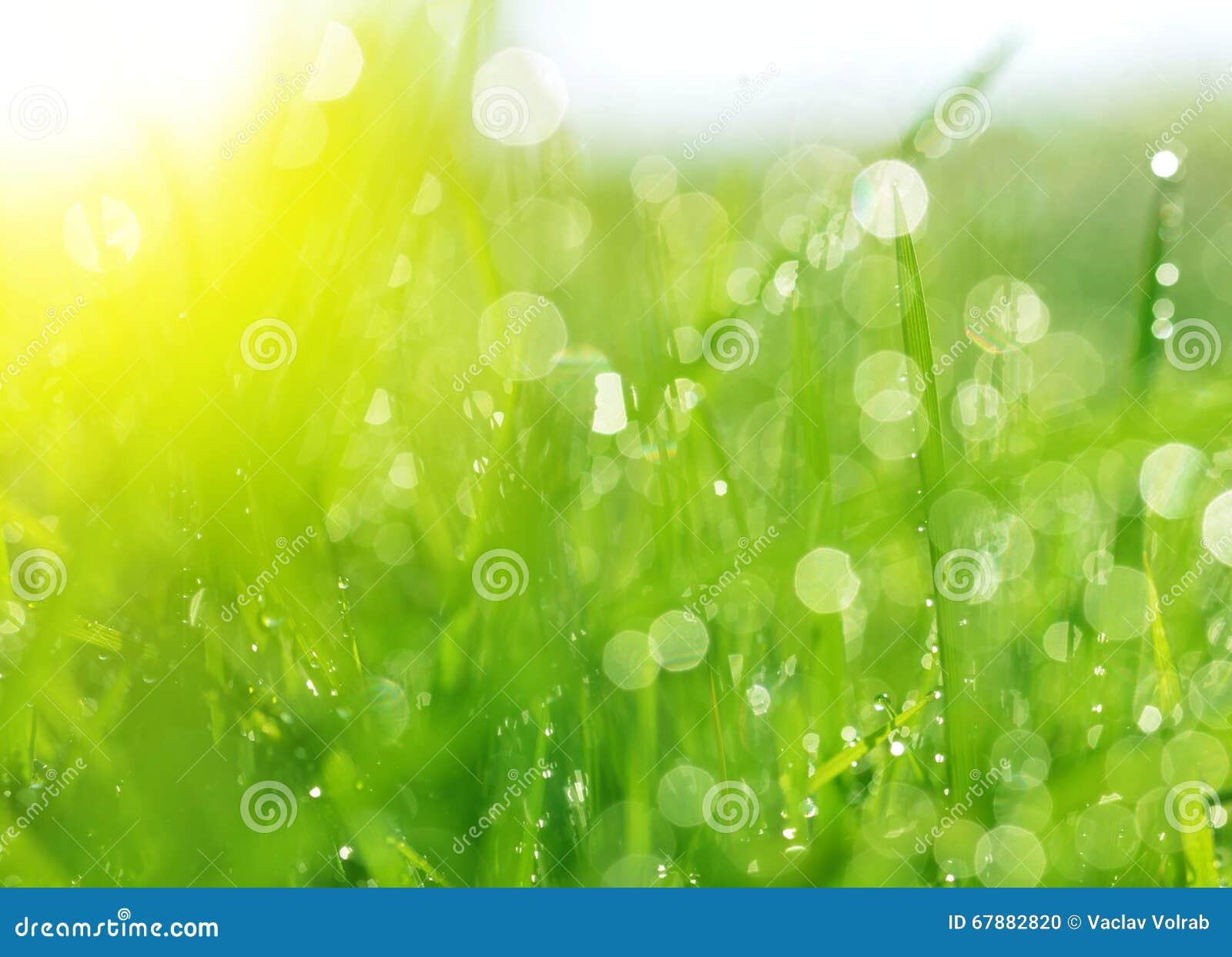 新春天bokeh和绿草