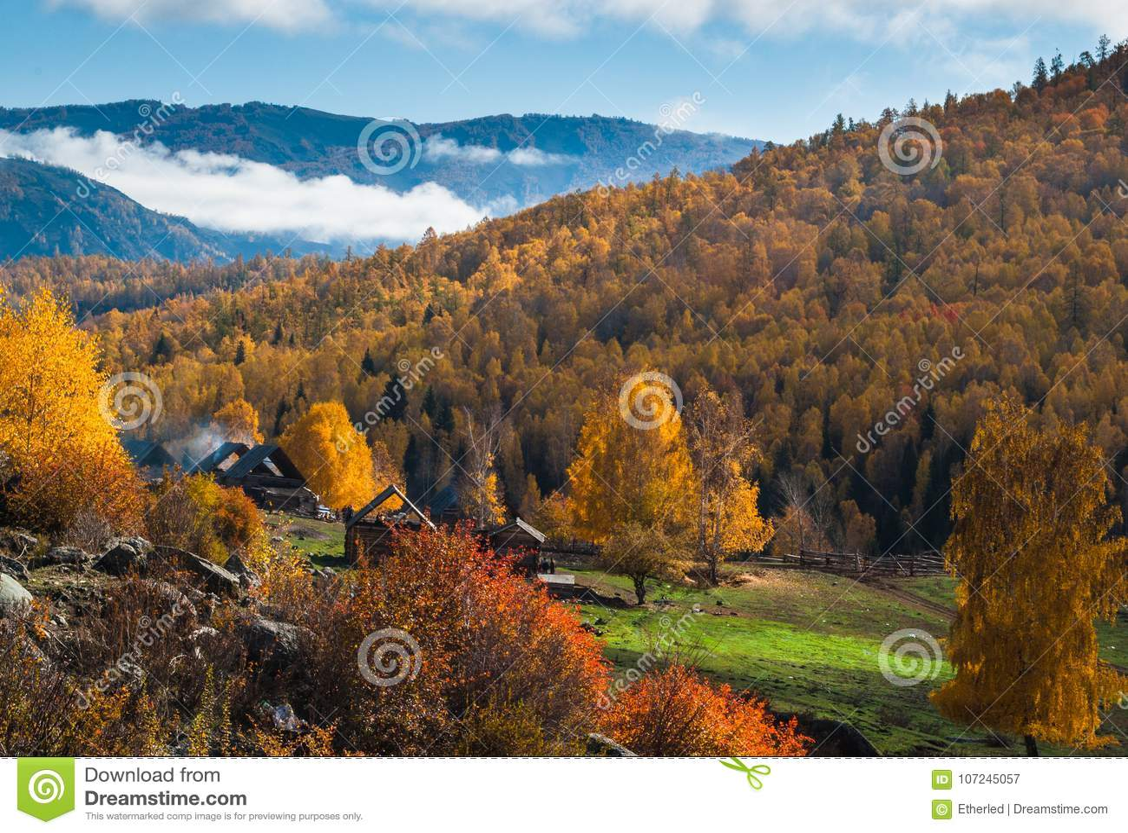 天空包括有模板,金黄,图片,10月,汉语,蒙古语,档案,自治权小学生风景森林免费图片