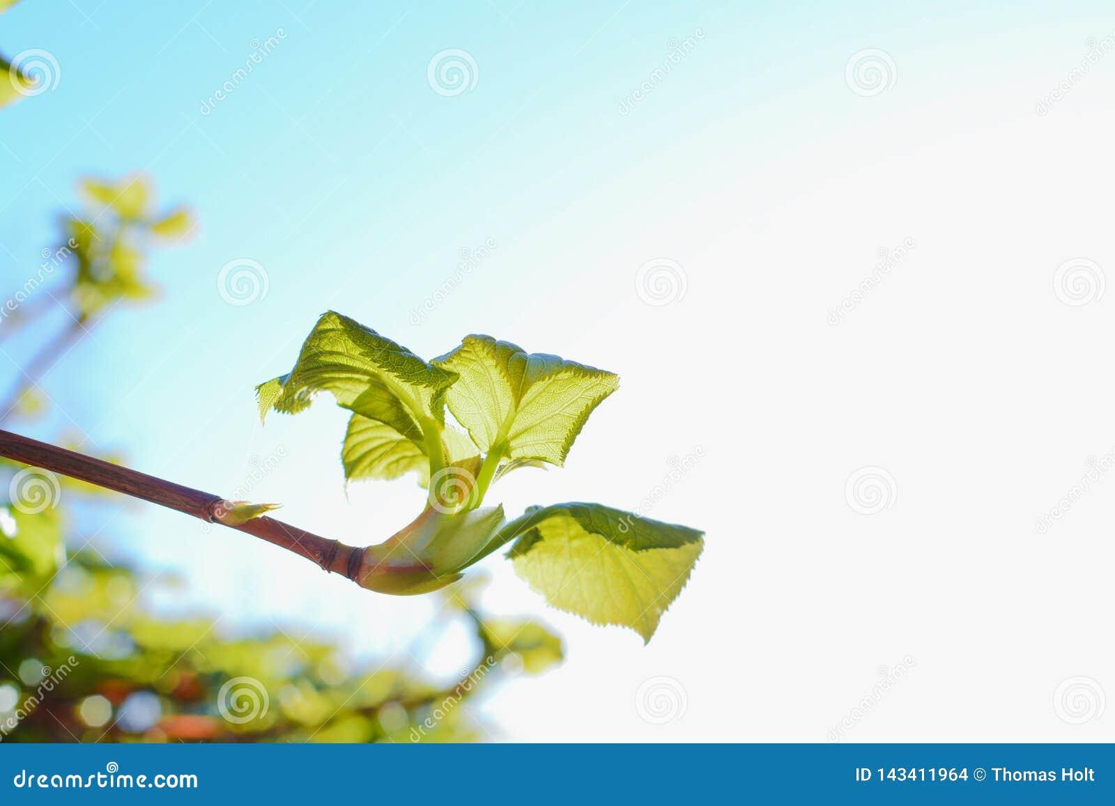 新的生长在庭院里的灌木和射击