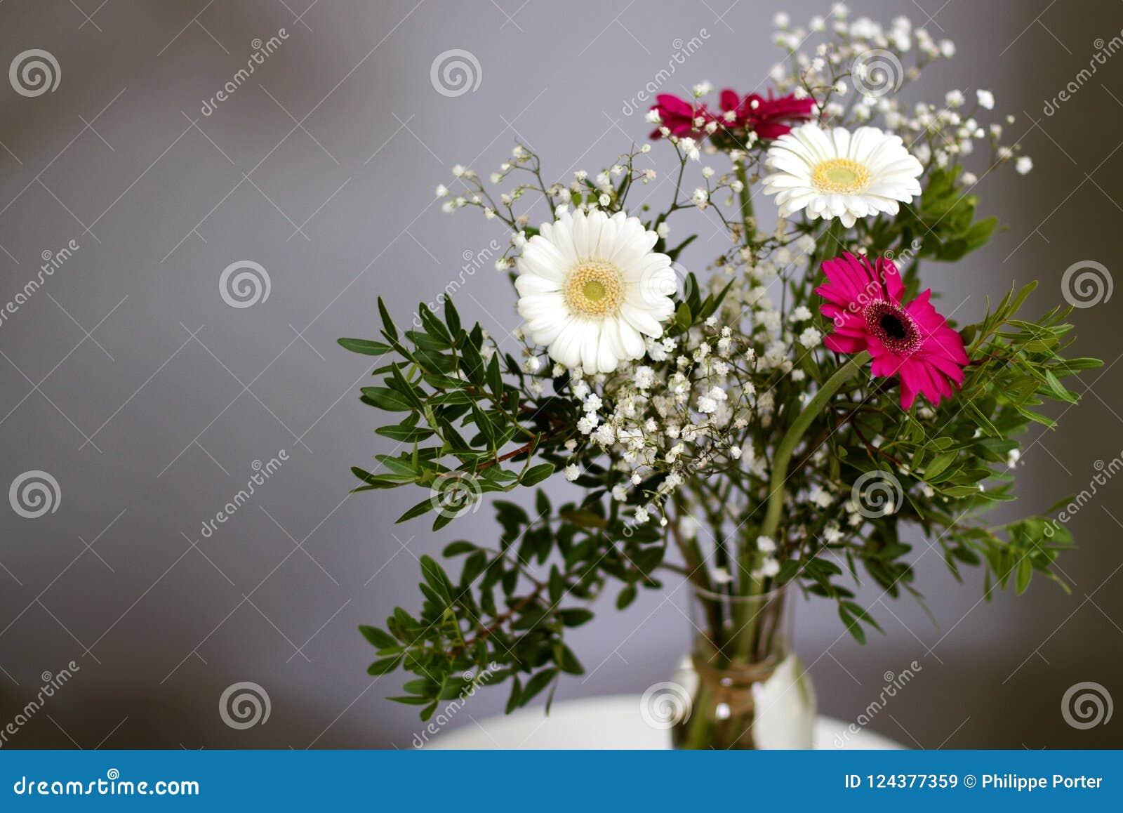 新的起点花束雏菊开花白色红色瓣忠诚的爱