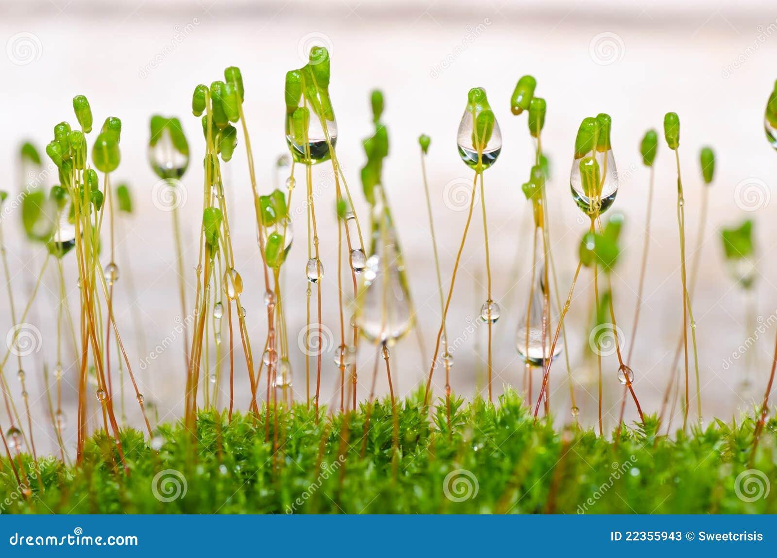 新绿色青苔本质