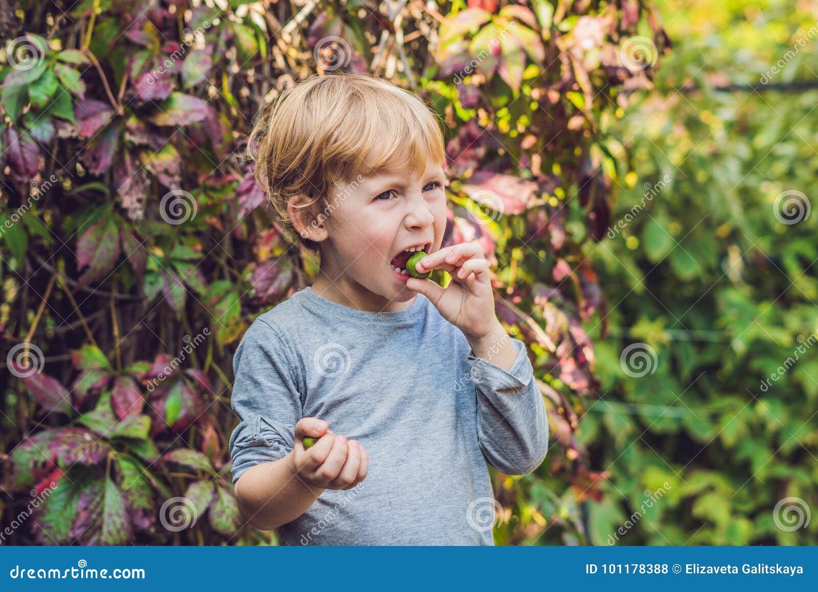 新西兰异乎寻常的食物 莓果nergi或者小猕猴桃 儿童picki