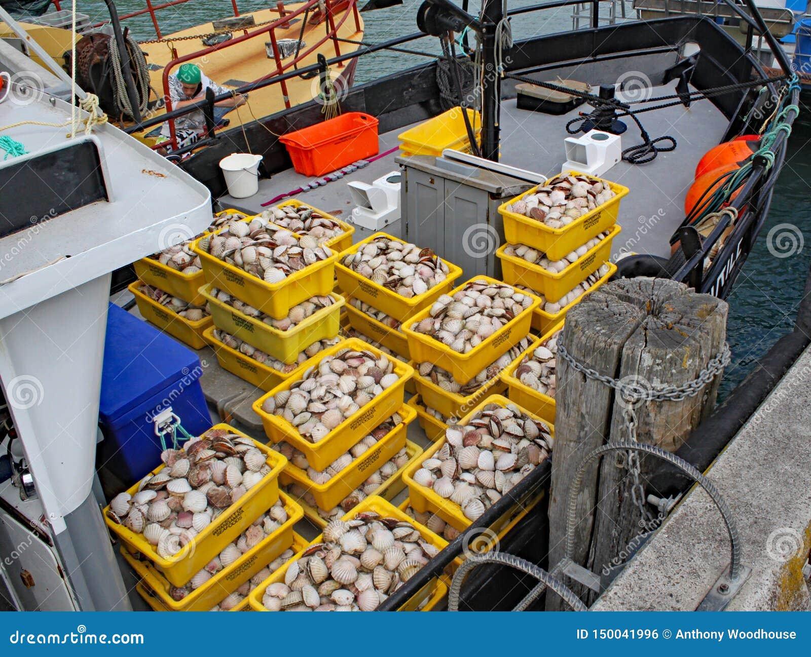 新近地捉住了海鲜被包装入黄色塑胶容器