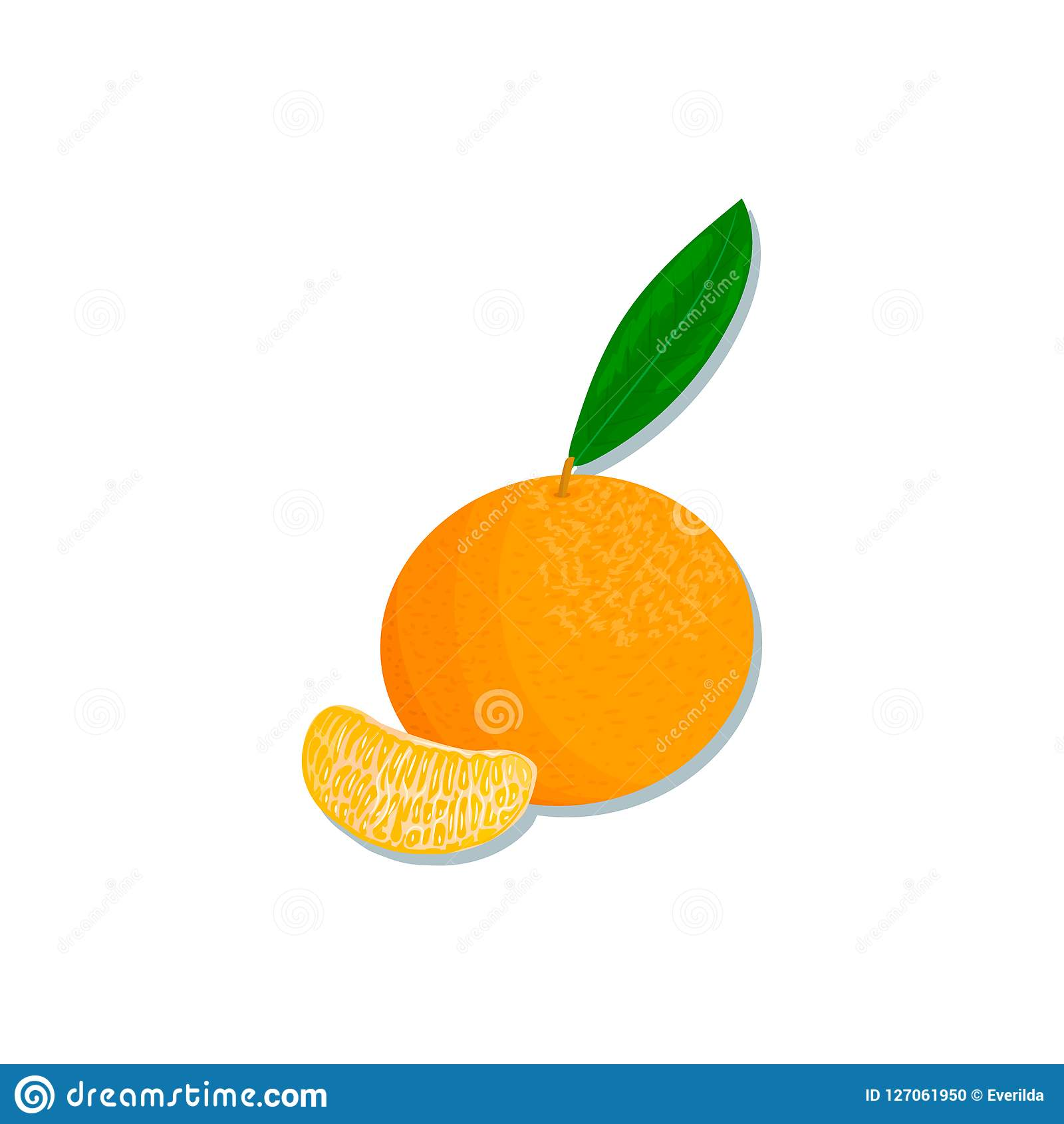 新鲜的柑橘 桔子、柠檬、石灰、香柠檬、蜜桔和葡萄柚与叶子和切片