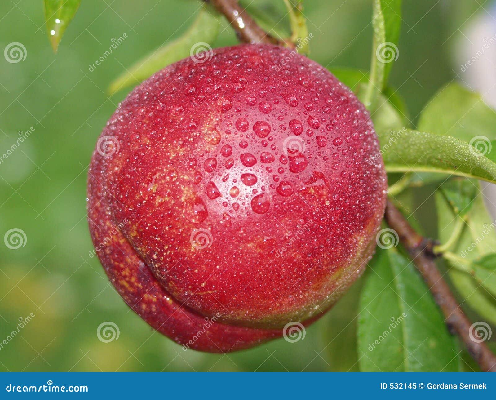Download 新鲜的桃子雨 库存图片. 图片 包括有 绿色, 食物, 对象, 五颜六色, 可食, 极好, 制动手, 宏指令 - 532145