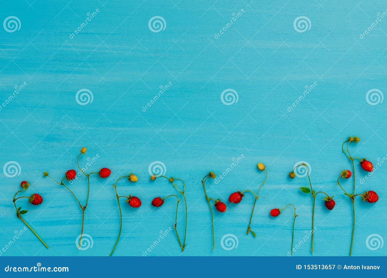 新鲜的植物用野草莓莓果,森林野草莓,顶视图
