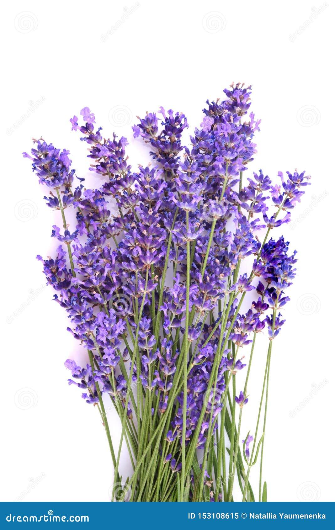新鲜的淡紫色花