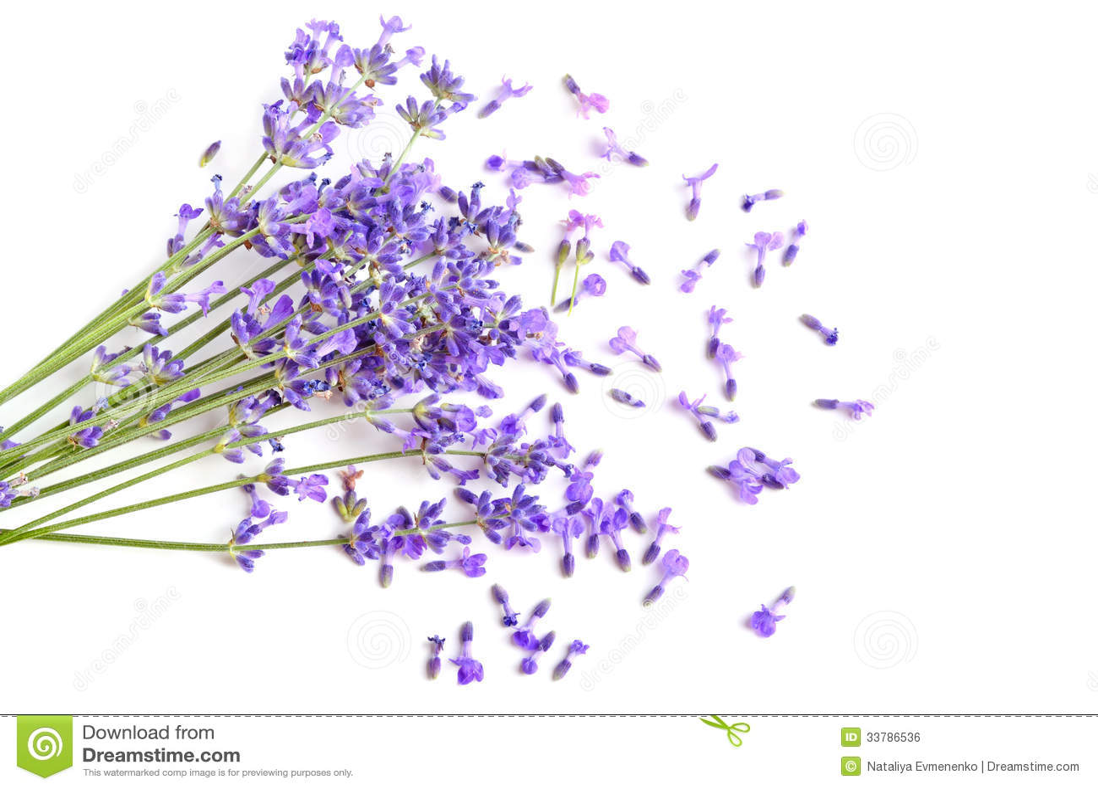 新鲜的淡紫色